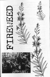 Fireweed #2
